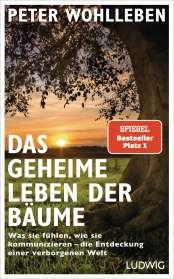 Peter Wohlleben: Das geheime Leben der Bäume, Buch