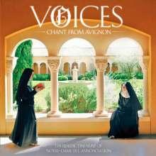 Voices - Gregorianische Gesänge aus Avignon, CD