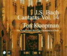 Johann Sebastian Bach (1685-1750): Sämtliche Kantaten Vol.14 (Koopman), 3 CDs