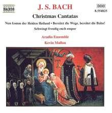 Johann Sebastian Bach (1685-1750): Kantaten BWV 36,61,132, CD