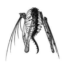 Lotic: Heterocetera, LP