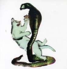 Les Savy Fav: Cat & The Cobra, CD