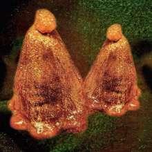 Black To Comm: Oocyte Oil & Stolen Androgens, LP