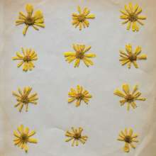 The Molochs: Flowers In The Spring, LP