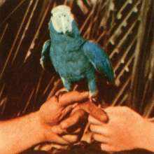 Andrew Bird: Are You Serious (180g) (Limited Deluxe Edition) (Blue Vinyl), LP