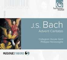 Johann Sebastian Bach (1685-1750): Kantaten BWV 36,61,62, CD