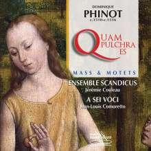 """Dominique Phinot (1510-1561): Messe """"Quam pulchra es"""", CD"""