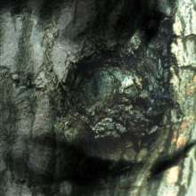 Yann Tiersen: La Valse Des Monstres, CD