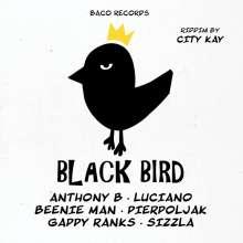 City Kay Pres. Various: Black Bird Riddim (Limited-Edition), LP