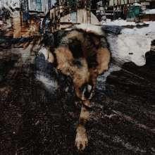 Joe Volk & Naiare: Primitive Energetics (180g), LP