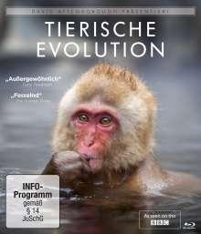 David Attenborough: Tierische Evolution (Blu-ray), Blu-ray Disc