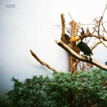 Jacob Bellens: Polyester Skin, CD