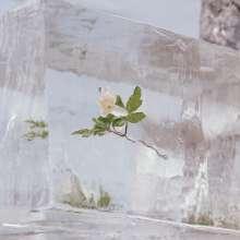 Efterklang: Windflowers (Limited Edition) (Clear Vinyl), LP