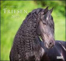 Friesen 2022 - Edle Pferde - Fotografiert von Christiane Slawik - DUMONT-Wandkalender - Format 38,0 x 35,5 cm, Kalender