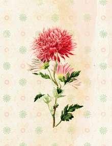 Die Gärten der Künstler Großes Notizheft (A5) Motiv Dahlie, Diverse