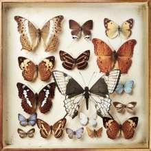 Emiliana Torrini: Rarities, 4 LPs