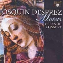 Josquin Desprez (1440-1521): Motetten, CD