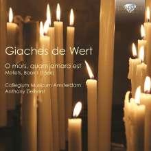 Giaches de Wert (1535-1596): Motetten Buch 1, CD