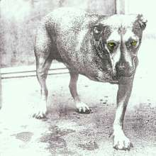 Alice In Chains: Alice In Chains, CD