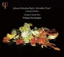 Johann Sebastian Bach (1685-1750): Kantaten BWV 25,46,105,138, CD