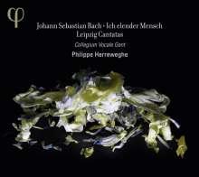 Johann Sebastian Bach (1685-1750): Kantaten BWV 44,48,73,109 (Leipziger Kantaten), CD