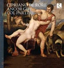 Cipriano de Rore (1516-1565): Madrigale, CD