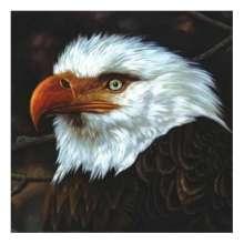Mogwai: The Hawk Is Howling, 2 LPs