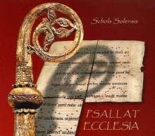 Psallat Ecclesia, SACD