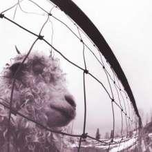 Pearl Jam: Vs. (remastered) (180g), LP