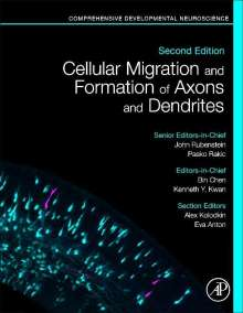 Bin Chen: Cellular Migration and Formation of Axons and Dendrites, Buch