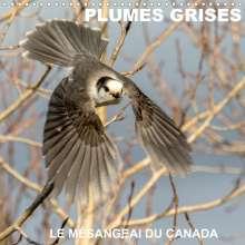 Philippe Henry: PLUMES GRISES - LE MÉSANGEAI DU CANADA (Calendrier mural 2020 300 × 300 mm Square), Diverse