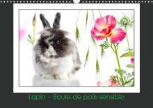 Kathy Mahevo: Lapin - Boule de poils sensible (Calendrier mural 2020 DIN A3 horizontal), Diverse
