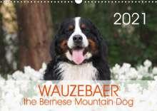 Sonja Brenner: WAUZEBAER the Bernese Mountain Dog (Wall Calendar 2021 DIN A3 Landscape), Kalender