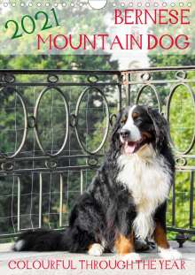 Sonja Brenner: Bernese Mountain Dog - colourful through the year (Wall Calendar 2021 DIN A4 Portrait), Kalender