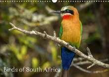 Sybrand le Roux & Toon Sanders: Birds of South Africa (Wall Calendar 2021 DIN A3 Landscape), Kalender