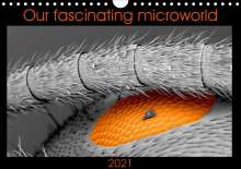 Nathalie Braun: Our fascinating microworld (Wall Calendar 2021 DIN A4 Landscape), Kalender