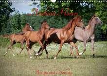 Angela Muenzel-Hashish: Arabian Horses - Beauty And Nobility (Wall Calendar 2022 DIN A3 Landscape), Kalender