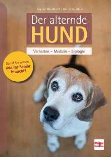 Sophie Strodtbeck: Der alternde Hund, Buch