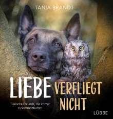 Tanja Brandt: Liebe verfliegt nicht, Buch