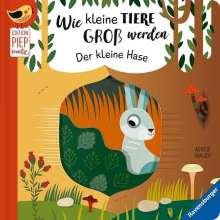 Gabriele Clima: Wie kleine Tiere groß werden: Der kleine Hase, Buch
