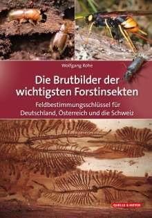 Wolfgang Rohe: Die Brutbilder der wichtigsten Forstinsekten, Buch