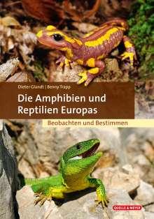 Dieter Glandt: Die Amphibien & Reptilien Europas, Buch