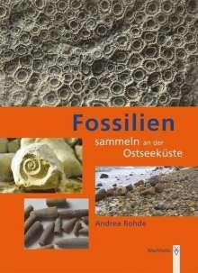 Andrea Rohde: Fossilien sammeln an der Ostseeküste, Buch