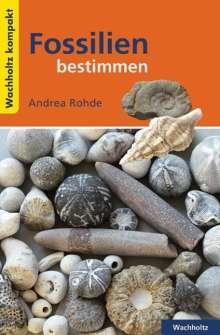 Andrea Rohde: Fossilien bestimmen KOMPAKT, Buch
