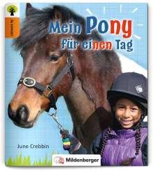 June Crebbin: Ja sowas! Mein Pony für einen Tag, Buch