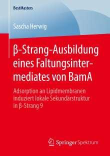 Sascha Herwig: ß-Strang-Ausbildung eines Faltungsintermediates von BamA, Buch