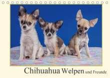 Gabriela Wejat-Zaretzke: Chihuahua Welpen und Freunde (Tischkalender 2020 DIN A5 quer), Diverse