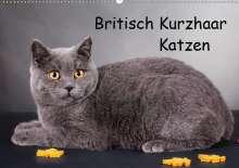 Gabriela Wejat-Zaretzke: Britisch Kurzhaar Katzen (Wandkalender 2020 DIN A2 quer), Diverse