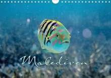 Clave Rodriguez Photography: Unterwasserwelt der Malediven II (Wandkalender 2020 DIN A4 quer), Diverse