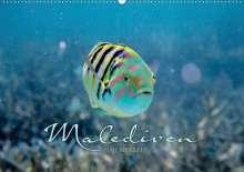 Clave Rodriguez Photography: Unterwasserwelt der Malediven II (Wandkalender 2020 DIN A2 quer), Diverse
